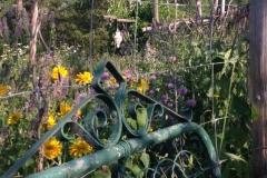 GardenGate_Heliopsis