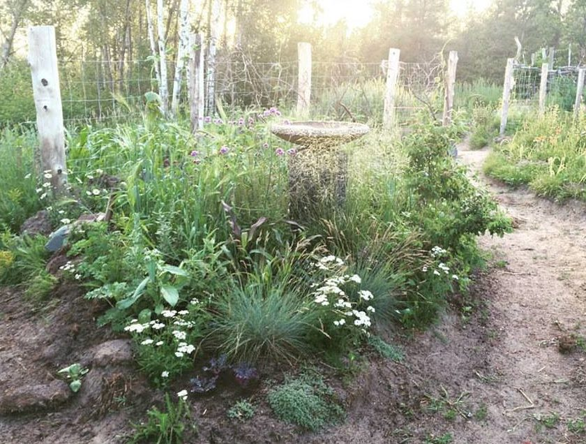 Achillea New Perennial Moongarden