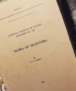 Scoggan Flora Manitoba